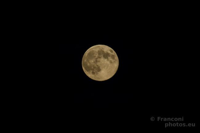 La luna e il richiamo della foresta.