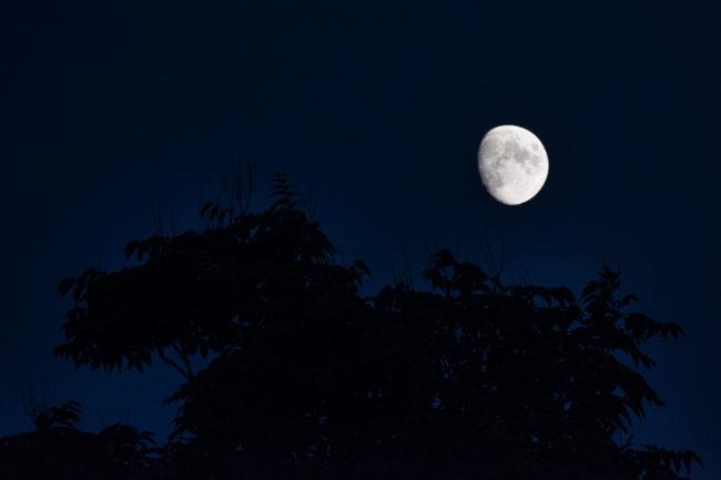 Il fascino del bosco di notte.