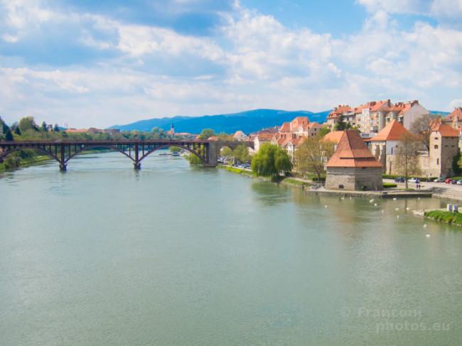 Maribor e la vite più longeva del mondo.